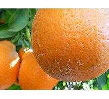 Plump Oranges Photographic Print