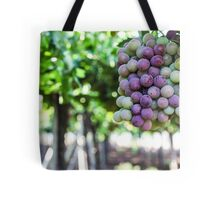 Ripe grapes on a vine in a vineyard  Tote Bag
