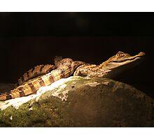 Baby Crocs Photographic Print