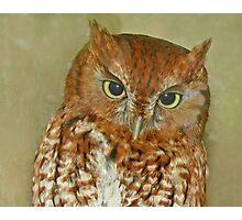 eastern screech owl Photographic Print