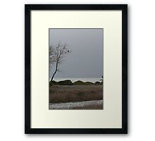 Hawk in tree Framed Print