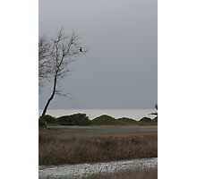 Hawk in tree Photographic Print