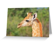 Giraffe Baby - Profile of new Life Greeting Card