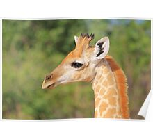 Giraffe Baby - Profile of new Life Poster