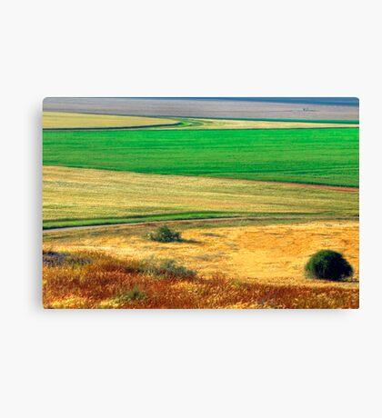 Wheat field, Negev desert, Israel Canvas Print