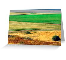 Wheat field, Negev desert, Israel Greeting Card