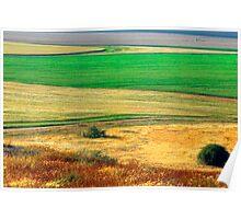 Wheat field, Negev desert, Israel Poster