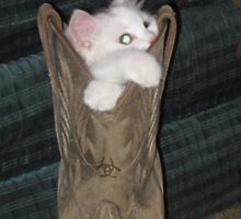 Puss in Boots..Literally by JPonce