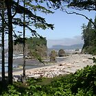 Ruby Beach by Yuval Levin