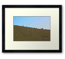 Tule Elk Framed Print