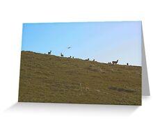 Tule Elk Greeting Card