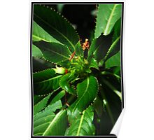 macro green plant Poster