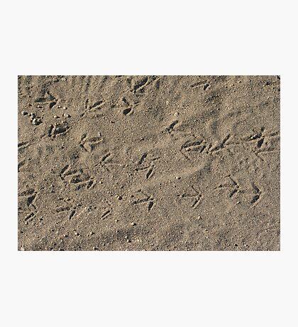 Quail tracks Photographic Print