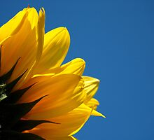 Sunny Days by Kylie Reid