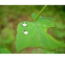 The world in a drop Photographic Print