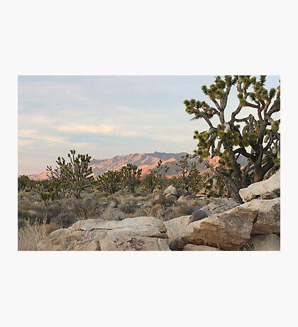 Clark Mountain Alpenglow Photographic Print