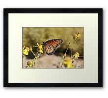 Queen Butterfly Framed Print