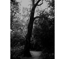 Scary Tree Photographic Print