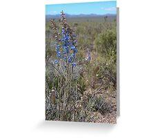 Nevada larkspur Greeting Card