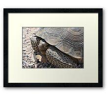 Nevada Tortoise Framed Print
