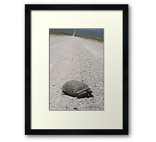 Tortoise on the road Framed Print