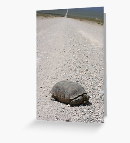 Tortoise on the road Greeting Card