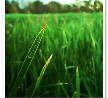 Optimism ahead (Grass) by Franki