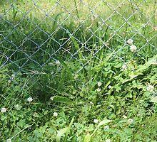 Fence by rachelrenee99