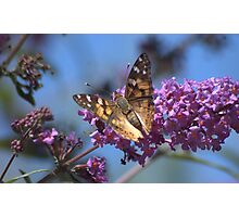 Butterly on Flower  Photographic Print
