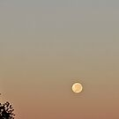 MoonRise by Erin Irwin