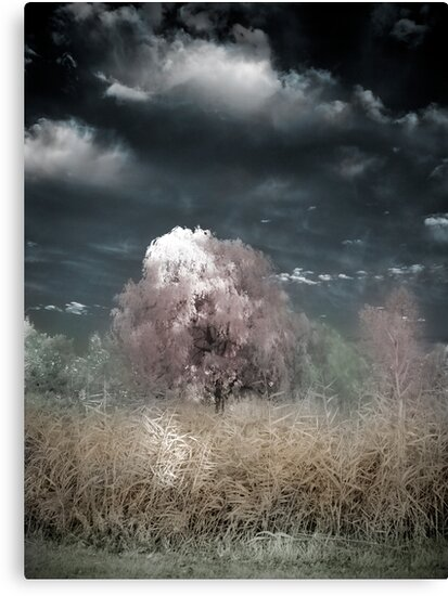 The Willow Tree by Annette Blattman