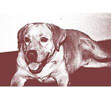 Sketch Of A Labrador Photographic Print