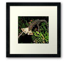 Gecko Kill Framed Print
