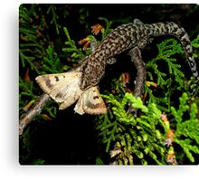 Gecko Kill Canvas Print