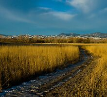 Winter Thaw by Jay Ryser