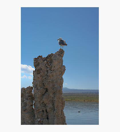 Mono Gull Photographic Print