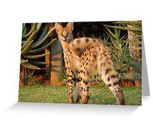 Serval cat 2 Greeting Card
