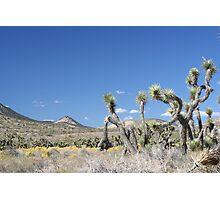 Freeman Canyon Photographic Print