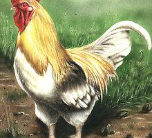 Farmyard Cockrel by RainbowDesign