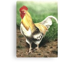 Farmyard Cockrel Canvas Print