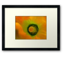 The Heart Of The Marrow - Courgette Flower - NZ Framed Print