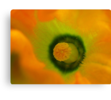 The Heart Of The Marrow - Courgette Flower - NZ Canvas Print