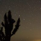 Mojave Night 2 by Chris Clarke