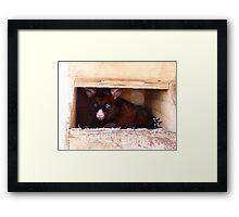 Close The Door!! I Don't Enjoy Sunlight.. Possum -NZ Framed Print