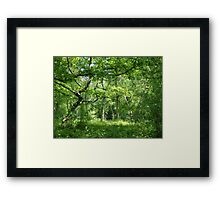 Ancient English Woodland Framed Print
