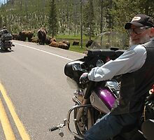 Yellowstone Bikers and Buffalo by cameraperson