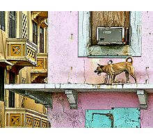 the guardian Photographic Print