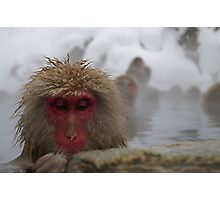 Japanese Snow Monkey Photographic Print