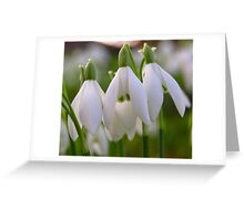 First Snowdrop Greeting Card