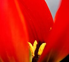 Anatomy of a Tulip: The Slip by Megan Campbell